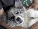 Indy endormi dans les bras_web.jpg