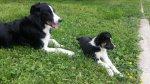 Jack et Poppy.jpg