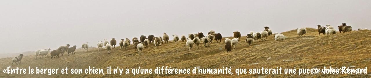 """""""Entre le berger et son chien, il n'y qu'une différence d'humanité, que..."""