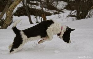 Plongeon dans la neige...