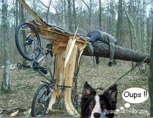 Ginger et les vélos
