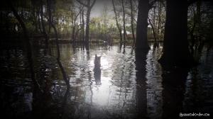 laika dans les bayous aquitains