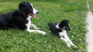 Jack et Poppy