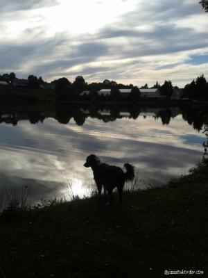 Au bord de l'étang...