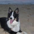 Sur la plage à Moliets...