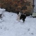 Ossau, 3 mois, découvre la neige